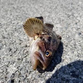 釣りに詳しい方…