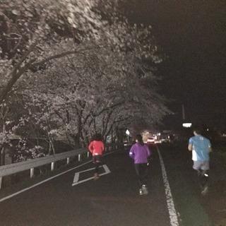 静岡市内 平日夜ランニングメンバー募集。