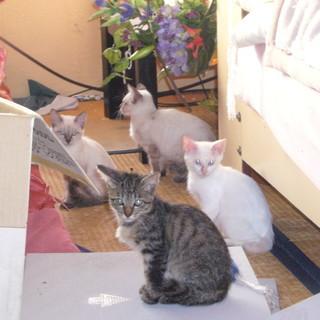 可愛い子猫ちゃん。家族に迎えてあげてください。(=^..^=)ミャー
