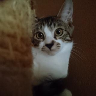 6か月男子 - 猫