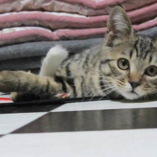 4.5か月女子 - 猫