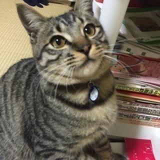[トライアル中] 猫の里親募集