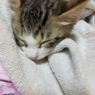 生後1ヶ月半位 - 猫