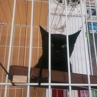 親子愛に満ちた、黒猫親子です。