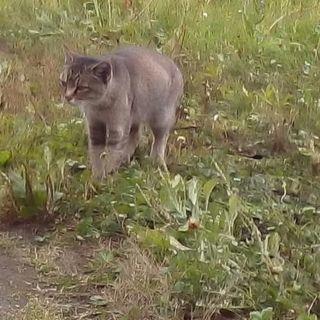 猫の里親さん募集