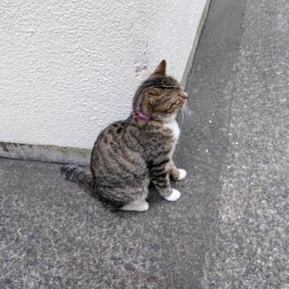迷い猫ちゃん メス