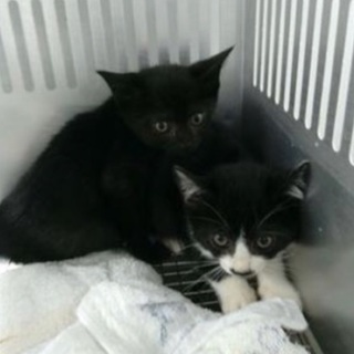保健所収容‼︎明日の朝がタイムリミット子猫姉妹二匹です