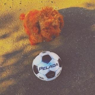 サッカーチームに入りたい