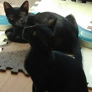 2017年6月頃産まれの兄弟猫(仮名:ユキチ&ジゲン)♂の…