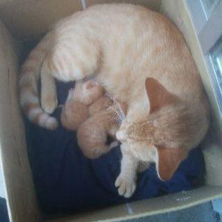 仔猫3匹、野良猫が産みました。