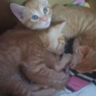 仔猫3匹、野良猫が産みました。 - 里親募集