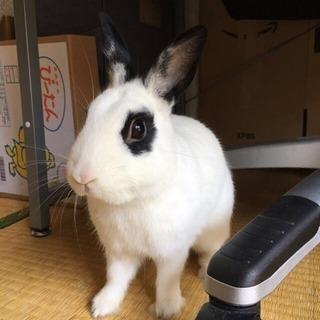 ウサギを大切にしてあげてください
