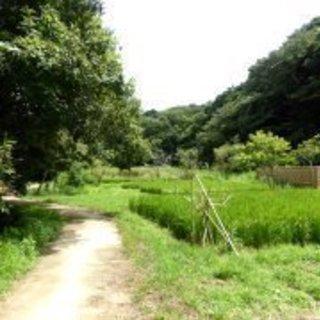 10月28日(土)鎌倉広町緑地~江ノ島で江ノ島丼