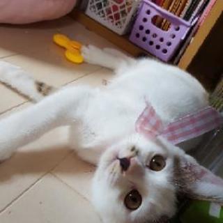 推定3ヶ月の女の子の子猫の里親さんを募集中です!