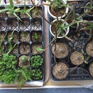希望は植木鉢などに交換で0円 植物各種1鉢50円