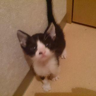 生後一ヶ月の元気な子猫♂(ワクチン済み)