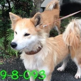 期限9/28 萩市保健所 尻尾ふさふさ可愛いわんちゃん093