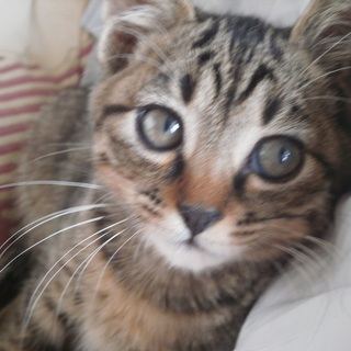 トラシマ仔猫の里親募集してます