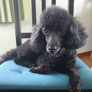 迷子犬の情報下さい。