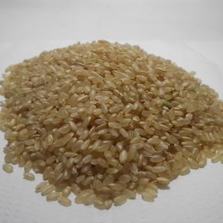 玄米 ひとめぼれ 平成29年新米 30kg 山口県産