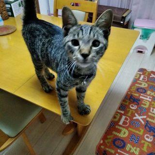 生後3ヶ月くらいの可愛い子猫です!