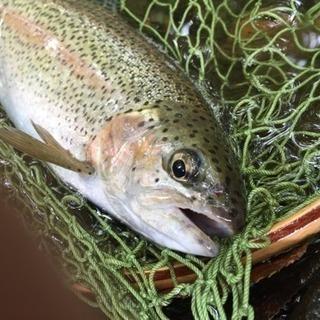 北見市 近郊で川釣りしています。