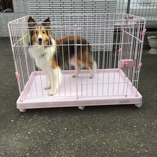 犬用ゲージ