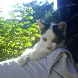 【再掲】(ↀДↀ)ノ <動画あり♪ 貰い手がなくて困ってます。何方かどうか飼ってあげてください。野良 子猫 黒白 白黒 シロクロ クロシロ雄  - 北佐久郡