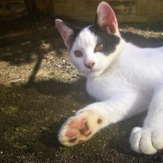 【再掲】(ↀДↀ)ノ <動画あり♪ 貰い手がなくて困ってます。何方かどうか飼ってあげてください。野良 子猫 黒白 白黒 シロクロ クロシロ雄  − 長野県