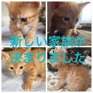 5匹の子猫の里親募集中です。(u_u*)。。