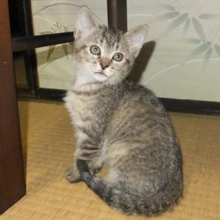 8月2日生まれの子猫2匹の里親募集