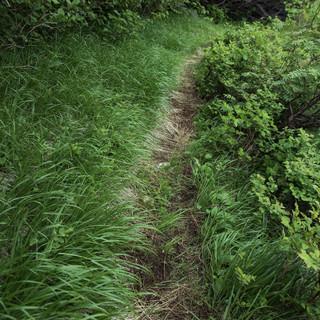 雑草だらけのお庭とグッバイしましょう!草刈りいたします」☆