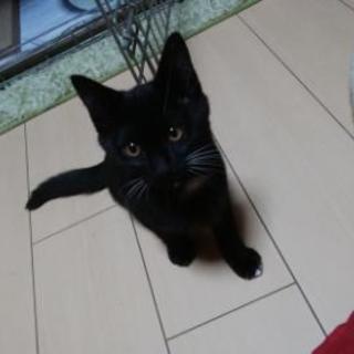 生後四ヶ月子猫
