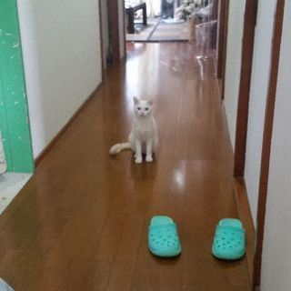 親子猫 - 浦添市