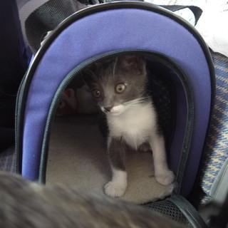 遺棄された姉妹、里親募集中です。三か月ぐらいの美猫さんです(=^・...