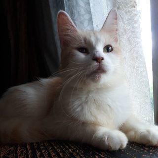 1歳くらいのメス猫で毛はフワフワ