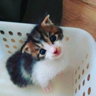 保護猫生後1ヶ月半