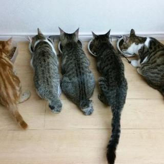保護犬猫の為のチャリティー用ハンドメイド作品を寄付して下さいませんか