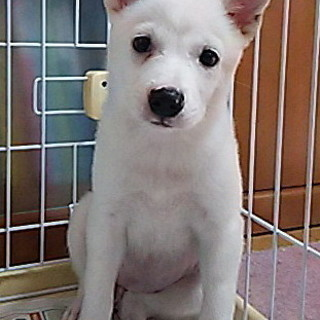 里親さん募集!!よく食べよく遊ぶ、2カ月越えの子犬です。