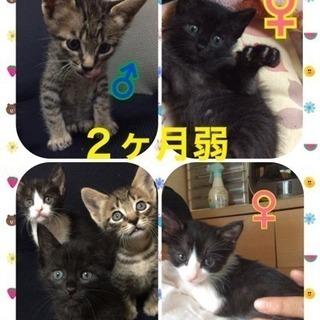 10/1(日)子猫の譲渡会in久留米