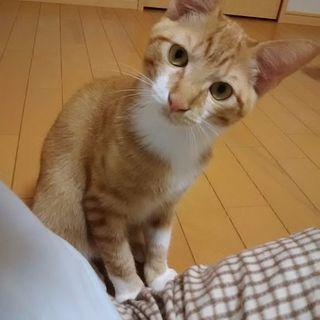 生後11ヶ月猫里親さん募集です(4月20日現在)