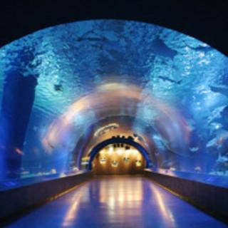 10月8日(10/8)  イルカやアシカのショーも楽しめる!水族館...