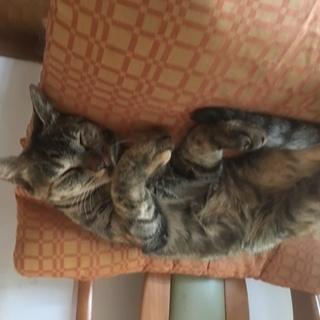 里親募集 成猫 3歳メス