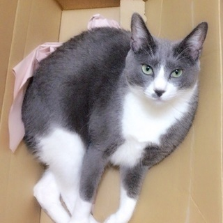 9/21日から猫を探しています。稲毛区、花見川区