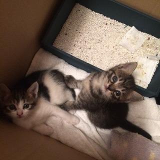 里親様決まりました 1ヶ月子猫ちゃんメス2匹保護しました 病気な...