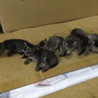 生後1ヶ月の6匹の子猫です