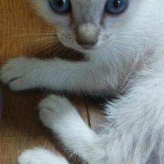 ✩大切に育ててくれる方✩ - 猫
