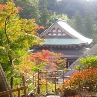 鎌倉お散歩会~鎌倉路地の紅葉を探しに~ 6名限定・参加費無料