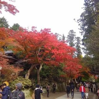 【12月1日開催・残席3名】鎌倉お散歩会~鎌倉路地の紅葉を探しに~...