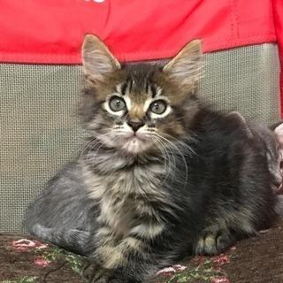 保護猫さん達ですが、たっぷりの愛情を注いで頂ける方を募集しています!